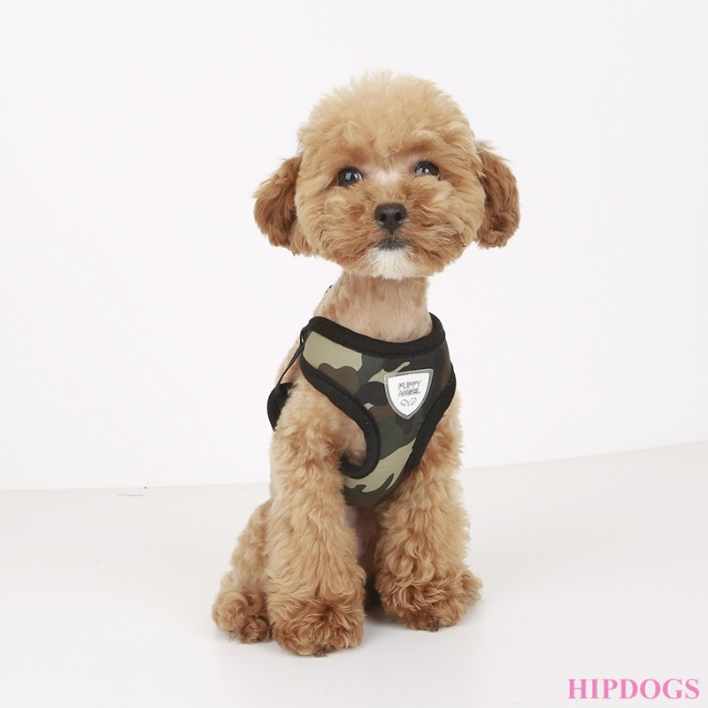 Puppy Angel DU ANGIONE Military Harness