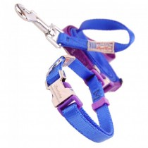 Nylon halsband & riem. Set royal/purple